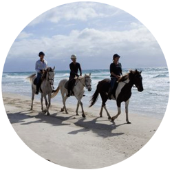 Ride the pure white sands of Pakiri Beach